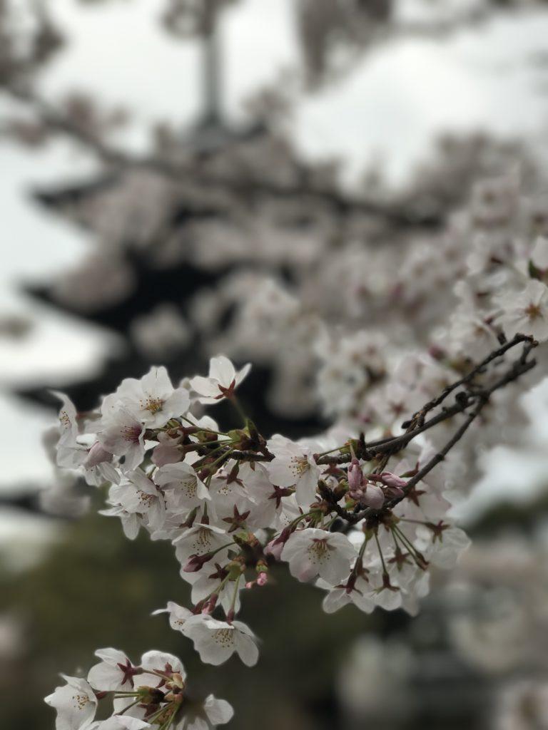 img 0133 1 768x1024 Kyoto (1/2) : sakura, karaoké, et pagodes