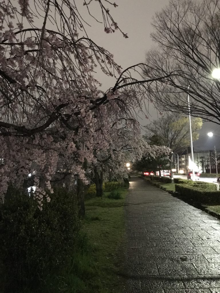 img 0151 1 768x1024 Kyoto (1/2) : sakura, karaoké, et pagodes