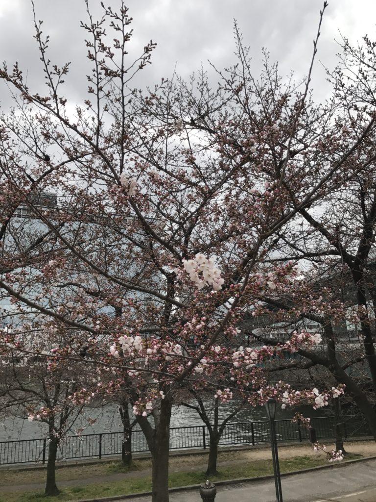 img 0204 768x1024 Osaka (1/3) : orgie alimentaire, cerisiers précoces, pluie, et shopping
