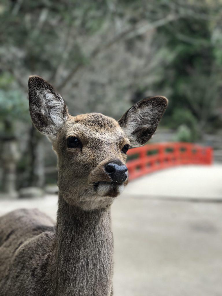 img 0489 768x1024 Beppu, Hiroshima, Miyajima : cest le sud