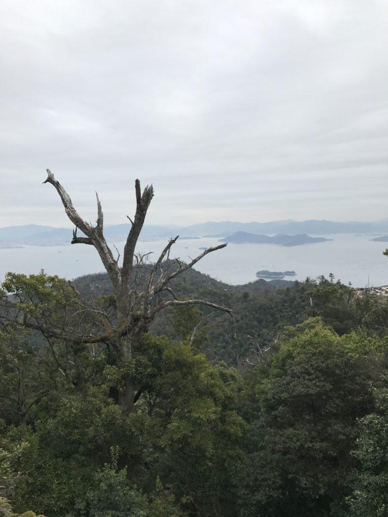 img 0508 768x1024 Beppu, Hiroshima, Miyajima : cest le sud