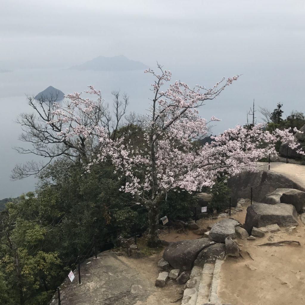 img 0533 1024x1024 Beppu, Hiroshima, Miyajima : cest le sud