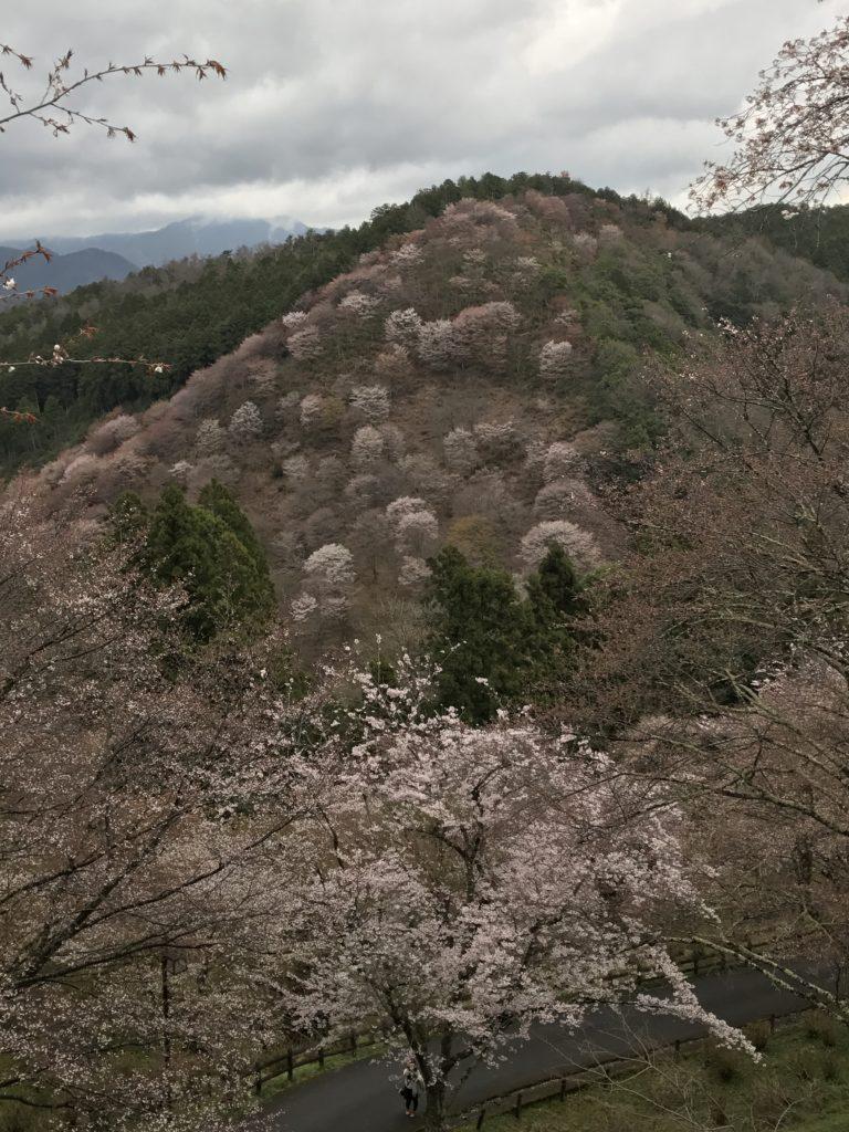 img 0622 768x1024 Osaka (2/3) / Himeji / Yoshino : cerisiers et repas de gros