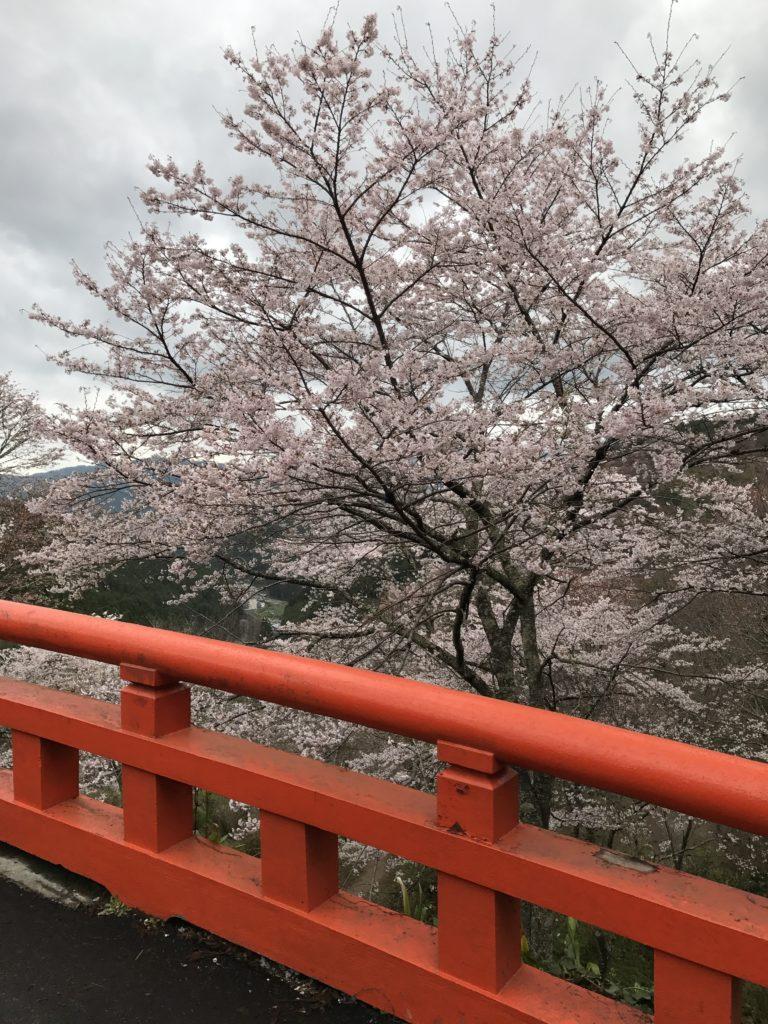 img 0623 768x1024 Osaka (2/3) / Himeji / Yoshino : cerisiers et repas de gros