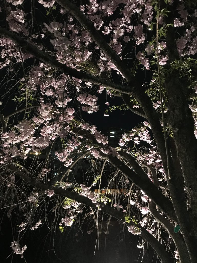 img 0733 1 768x1024 Osaka (2/3) / Himeji / Yoshino : cerisiers et repas de gros
