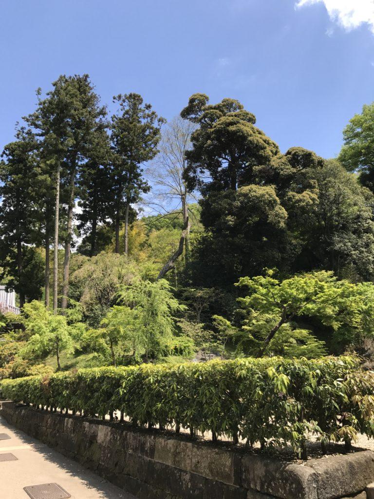 img 1676 768x1024 Kamakura : temples, mer et sushis