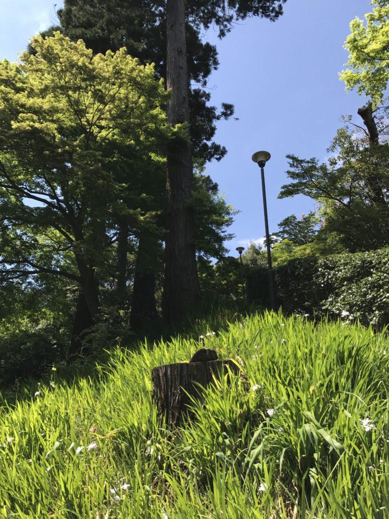 img 1683 768x1024 Kamakura : temples, mer et sushis
