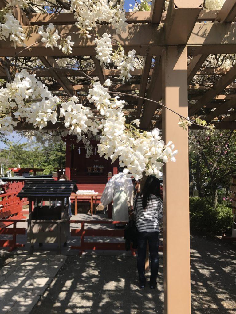 img 1720 768x1024 Kamakura : temples, mer et sushis