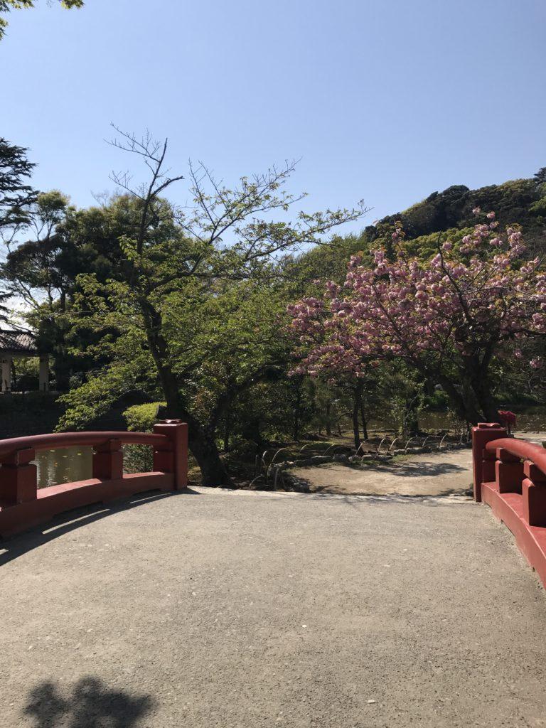 img 1722 768x1024 Kamakura : temples, mer et sushis