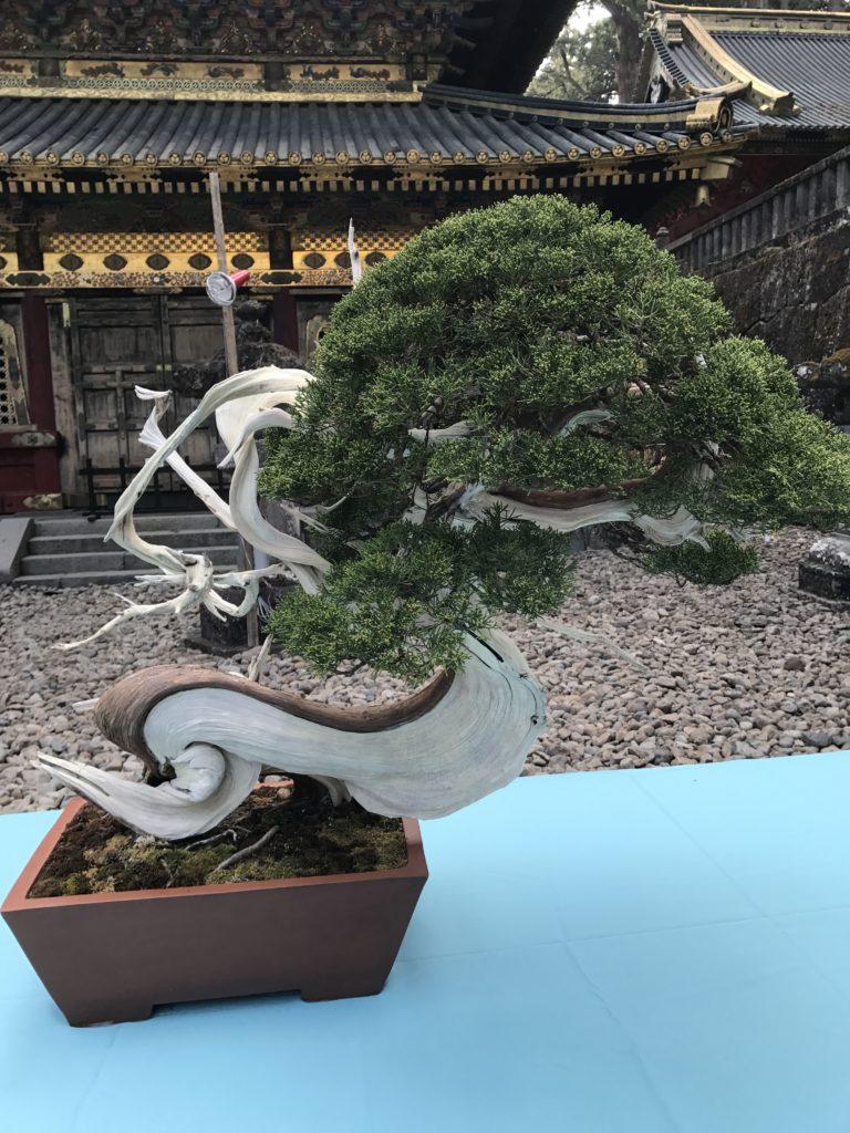 img 1845 768x1024 Nikkō : temples, dragons et lac Chûzenji