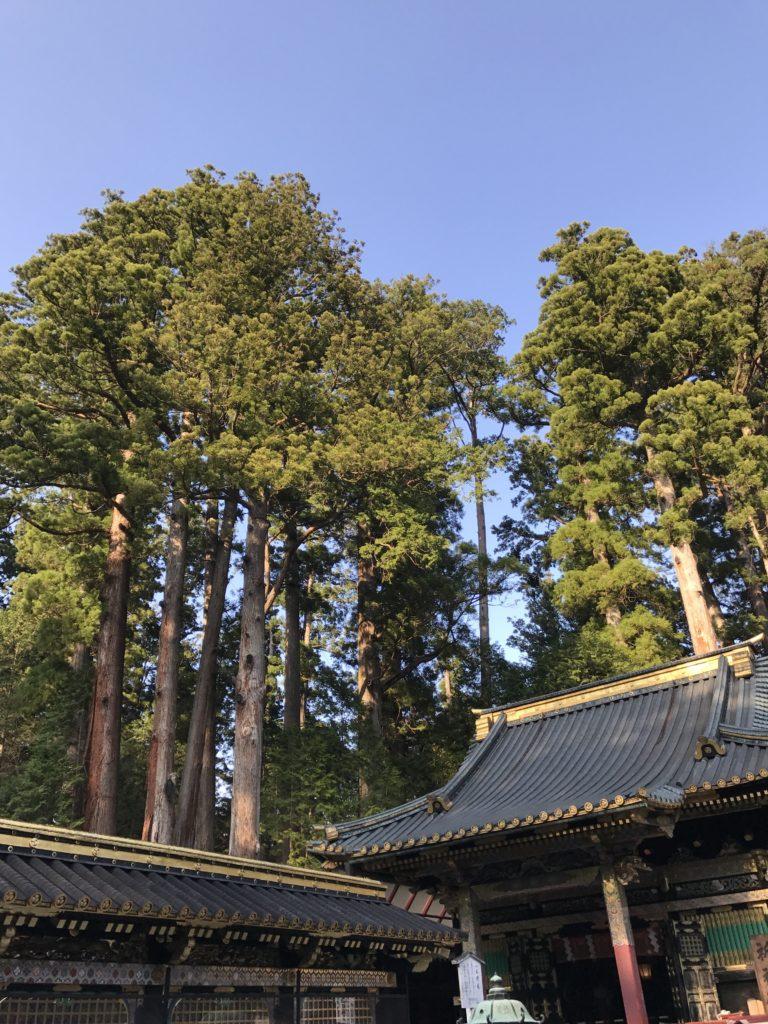 img 1865 768x1024 Nikkō : temples, dragons et lac Chûzenji