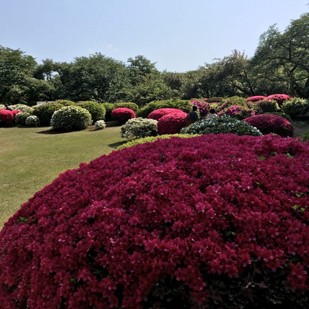 img 2176 1024x1024 Tokyo (2/2) : All you can eat, parcs, temples et adieux japonais