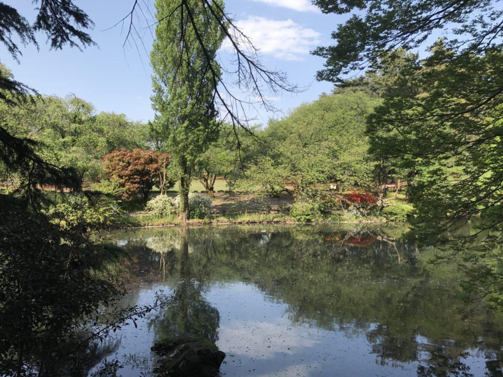 img 2183 1024x768 Tokyo (2/2) : All you can eat, parcs, temples et adieux japonais