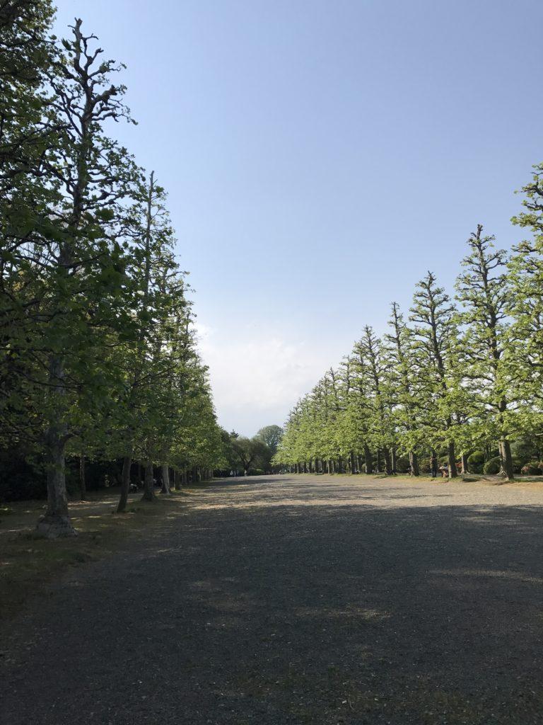 img 2187 768x1024 Tokyo (2/2) : All you can eat, parcs, temples et adieux japonais
