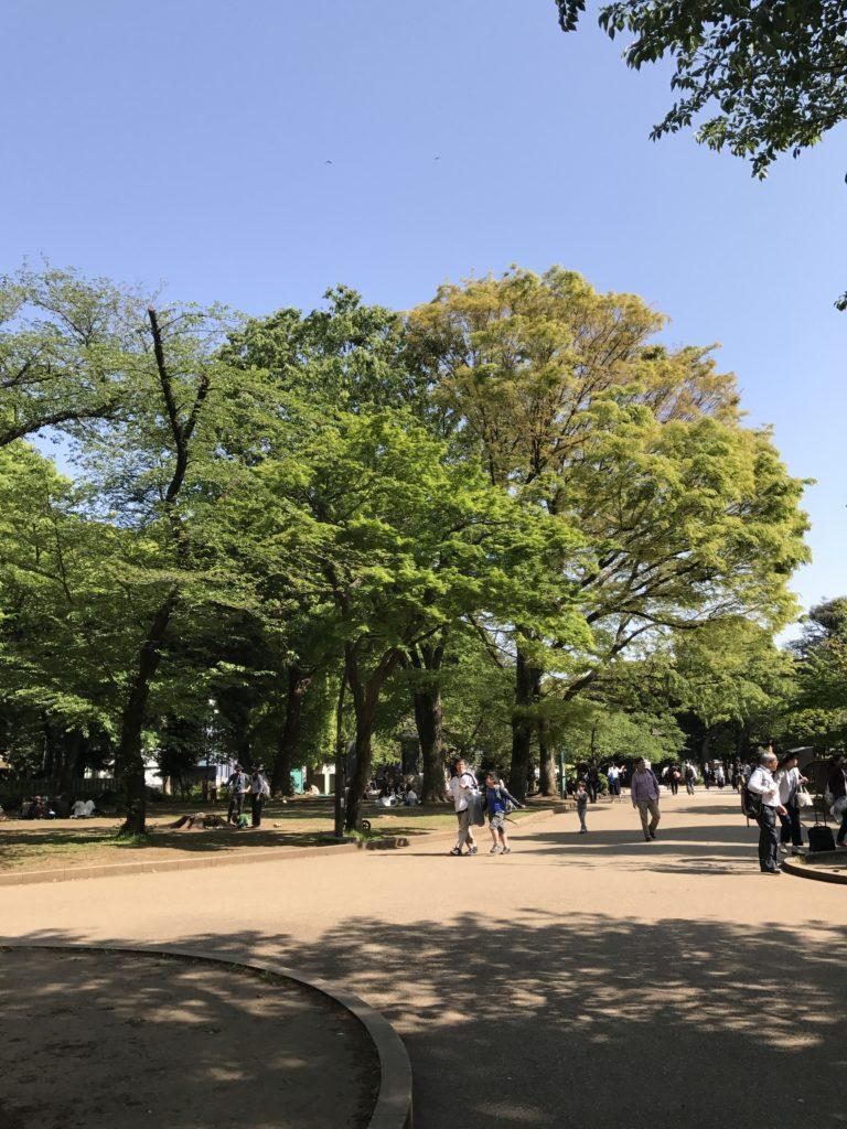 img 2344 768x1024 Tokyo (2/2) : All you can eat, parcs, temples et adieux japonais