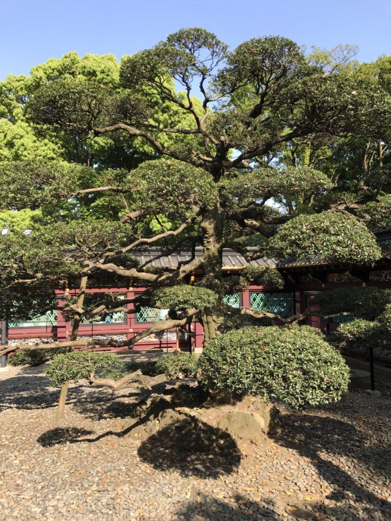 img 2377 768x1024 Tokyo (2/2) : All you can eat, parcs, temples et adieux japonais