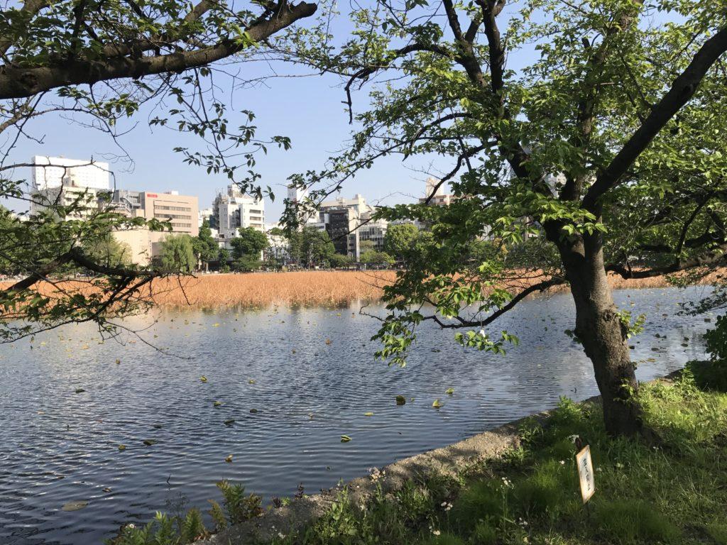 img 2396 1024x768 Tokyo (2/2) : All you can eat, parcs, temples et adieux japonais