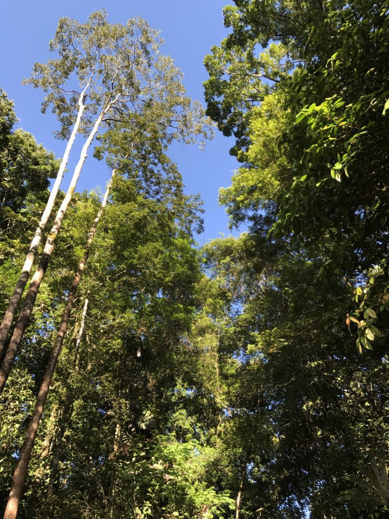 img 2605 768x1024 Sarawak : Kuching, Semmengoh et Bako National Park