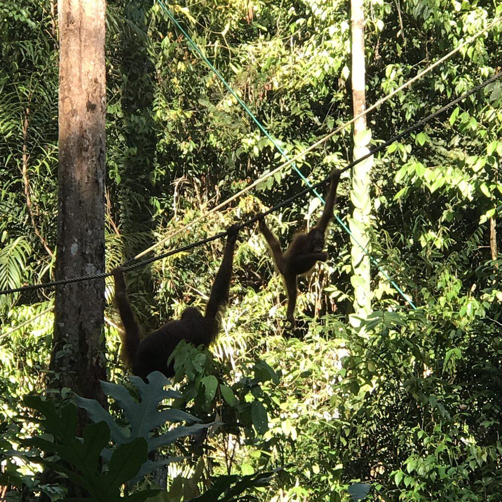 img 2631 1024x1024 Sarawak : Kuching, Semmengoh et Bako National Park