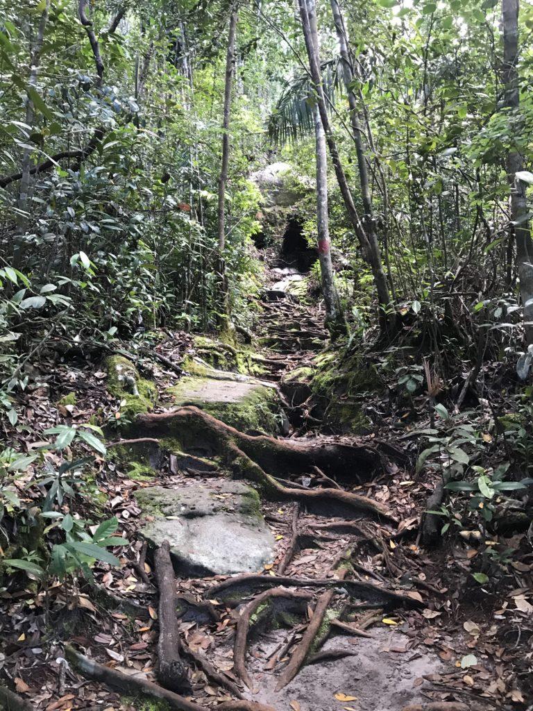 img 2736 768x1024 Sarawak : Kuching, Semmengoh et Bako National Park