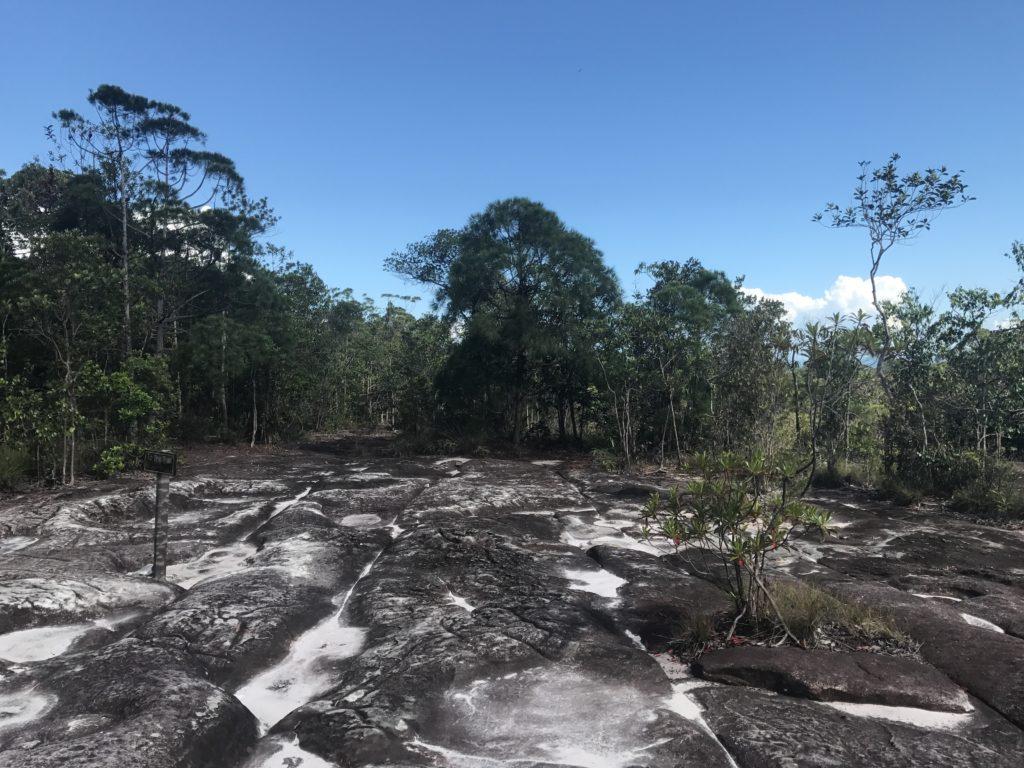 img 2738 1024x768 Sarawak : Kuching, Semmengoh et Bako National Park