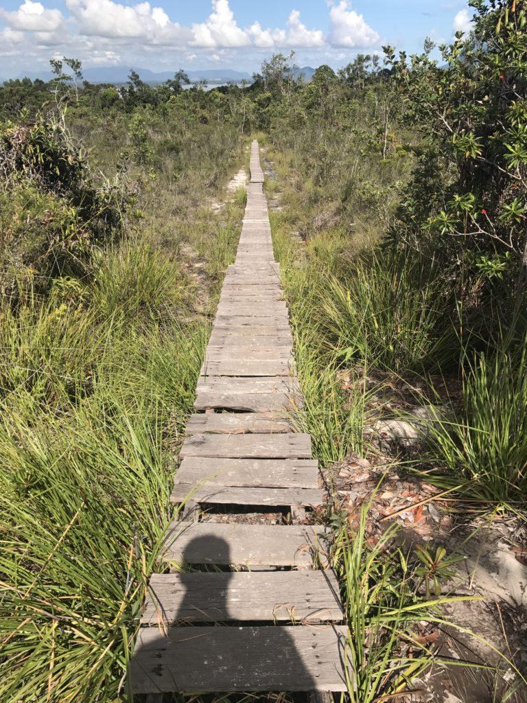 img 2743 768x1024 Sarawak : Kuching, Semmengoh et Bako National Park