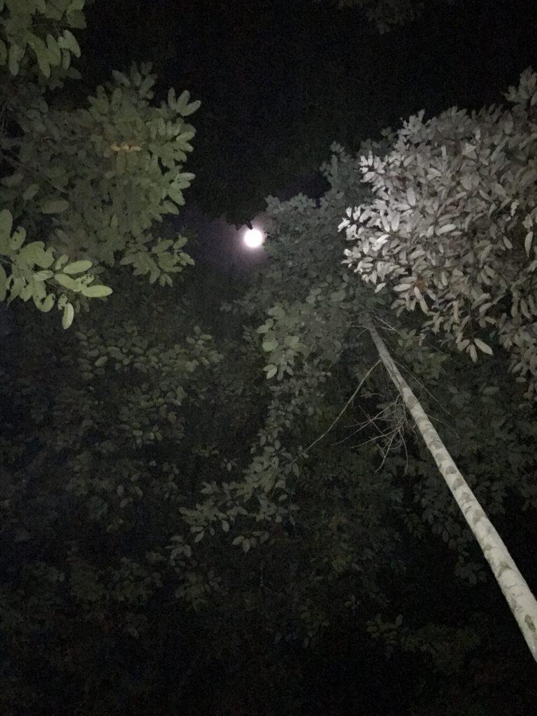 img 2921 768x1024 Mulu National Park ou Les Dupond et Dupont au pays des sangsues