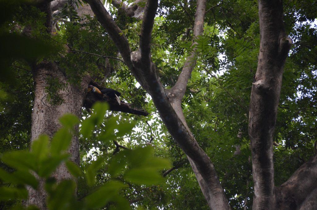 dsc0292 1024x678 Tangkoko : à la recherche du primate le plus petit du monde