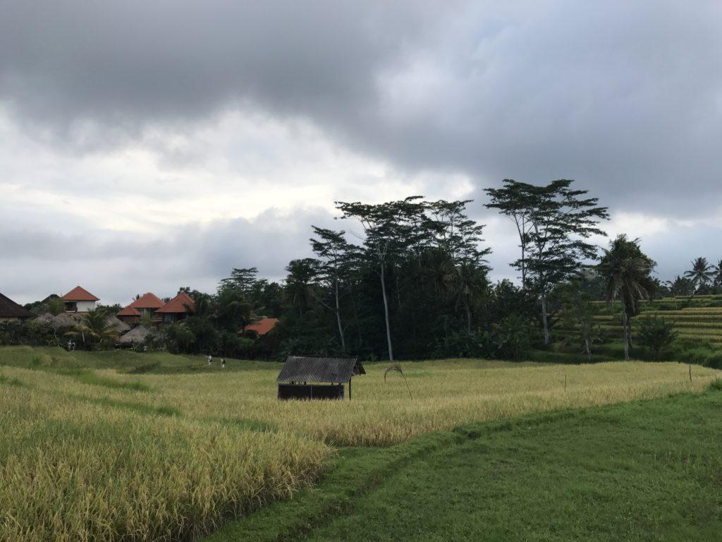 img 4239 1024x768 Ubud : Mont Batur, turmeric, courbatures et massages