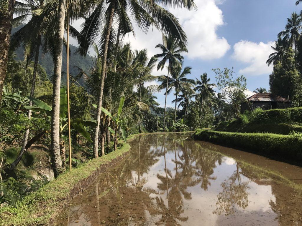 img 5304 1024x768 Singaraja, Sekumpul Waterfalls et Jatiluwih Rice Terrace