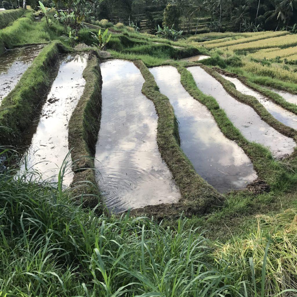 img 5480 1024x1024 Singaraja, Sekumpul Waterfalls et Jatiluwih Rice Terrace