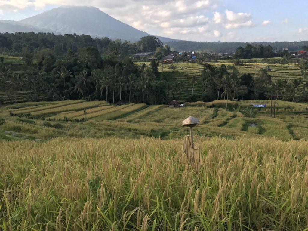 img 5482 1024x768 Singaraja, Sekumpul Waterfalls et Jatiluwih Rice Terrace