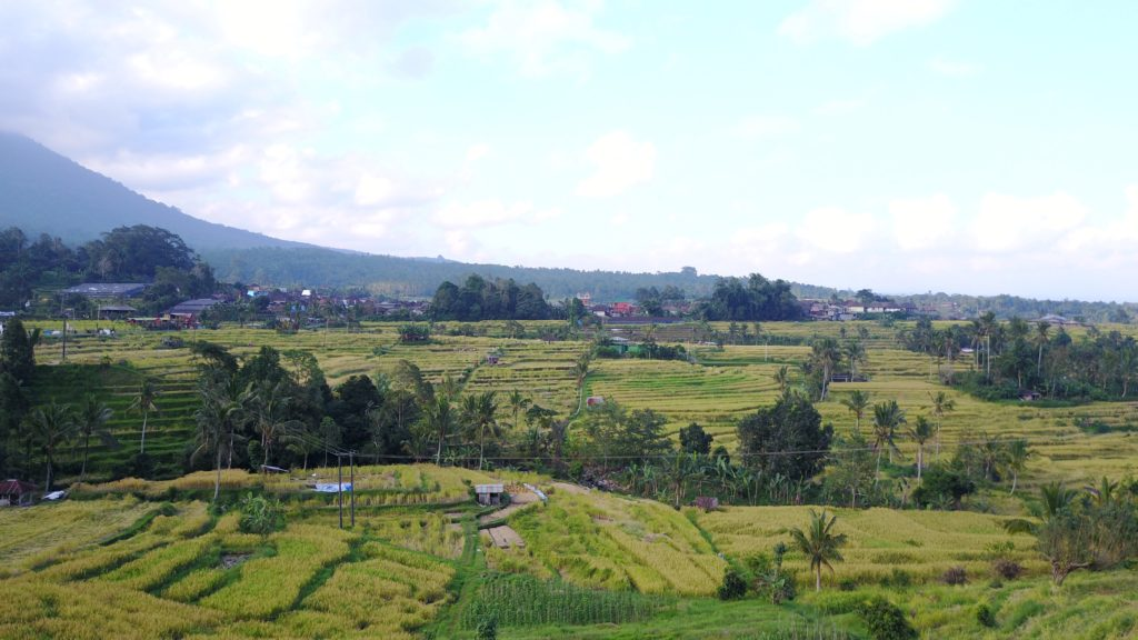 img 5554 1024x576 Singaraja, Sekumpul Waterfalls et Jatiluwih Rice Terrace