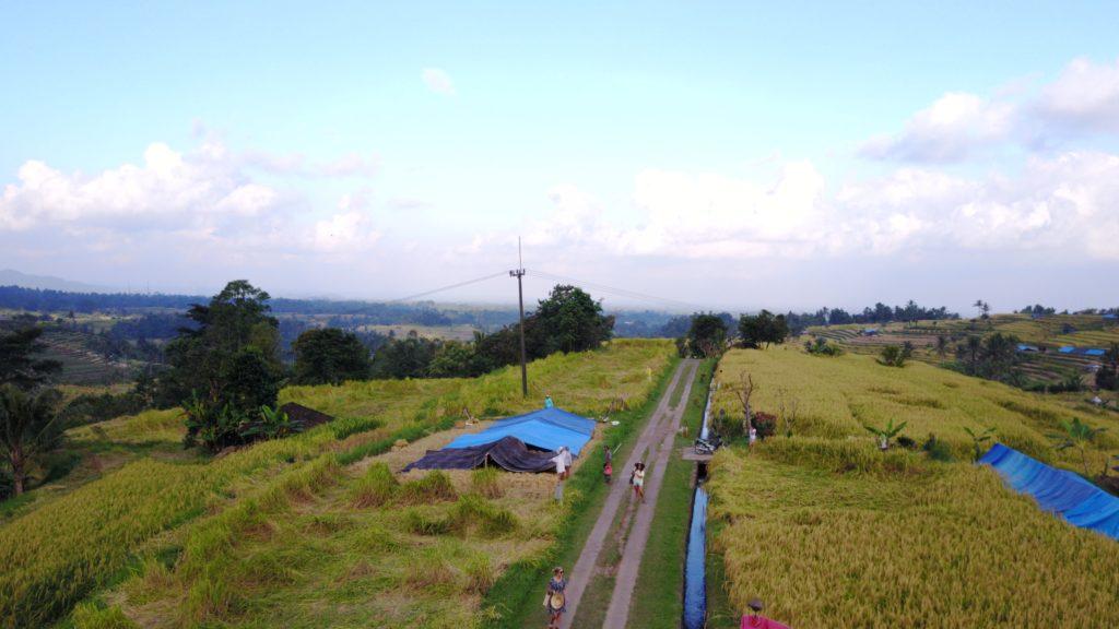 img 5566 1024x576 Singaraja, Sekumpul Waterfalls et Jatiluwih Rice Terrace