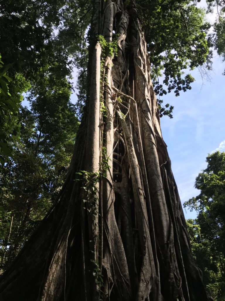 img 6725 768x1024 Tangkoko : à la recherche du primate le plus petit du monde
