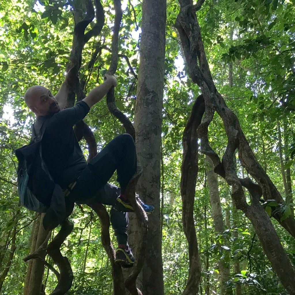 img 6744 1024x1024 Tangkoko : à la recherche du primate le plus petit du monde