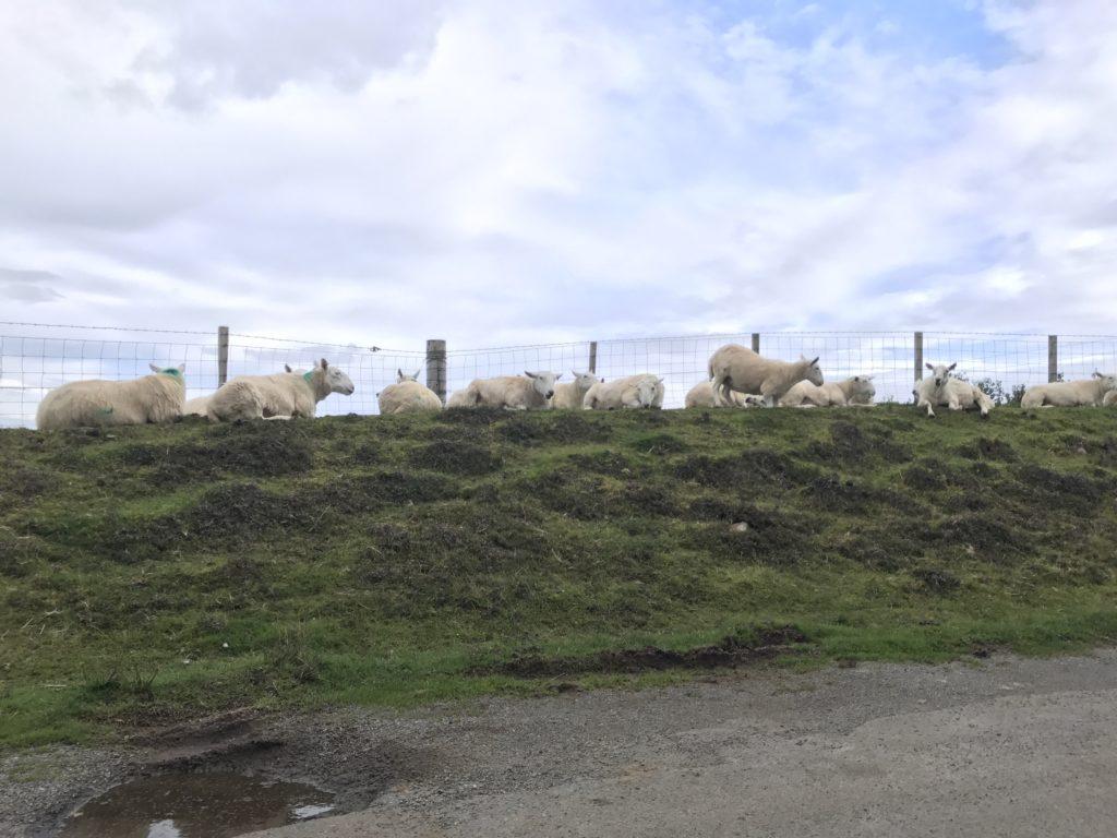 img 0945 1024x768 Île de Skye : Châteaux, Moutons et Merveilles