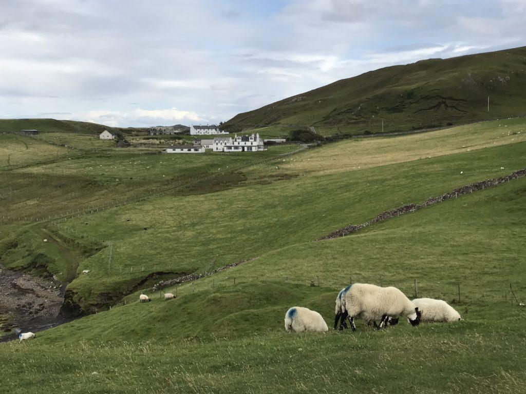 img 0952 1024x768 Île de Skye : Châteaux, Moutons et Merveilles