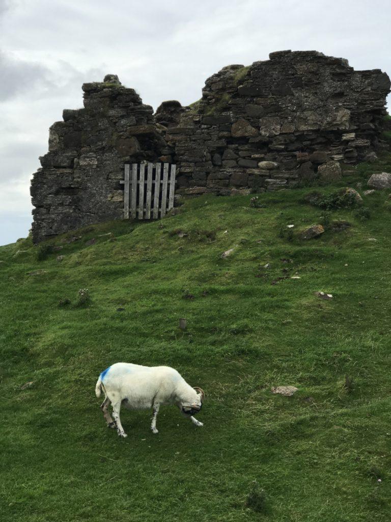 img 0956 768x1024 Île de Skye : Châteaux, Moutons et Merveilles