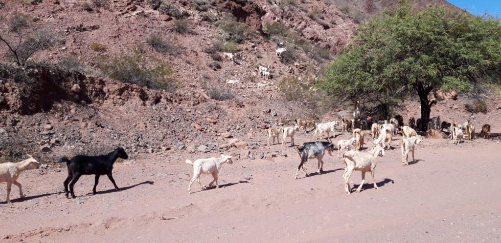 20190802 124929 1024x498 Salta, Cafayate, Purmamarca : les beautés du Nord Ouest Argentin