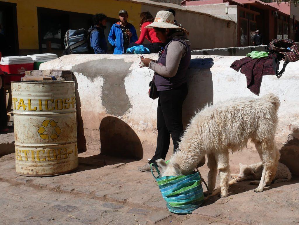P1030089 1024x769 Salta, Cafayate, Purmamarca : les beautés du Nord Ouest Argentin