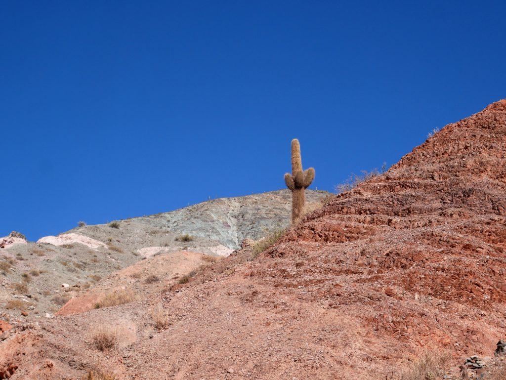 P1030111 1024x769 Salta, Cafayate, Purmamarca : les beautés du Nord Ouest Argentin