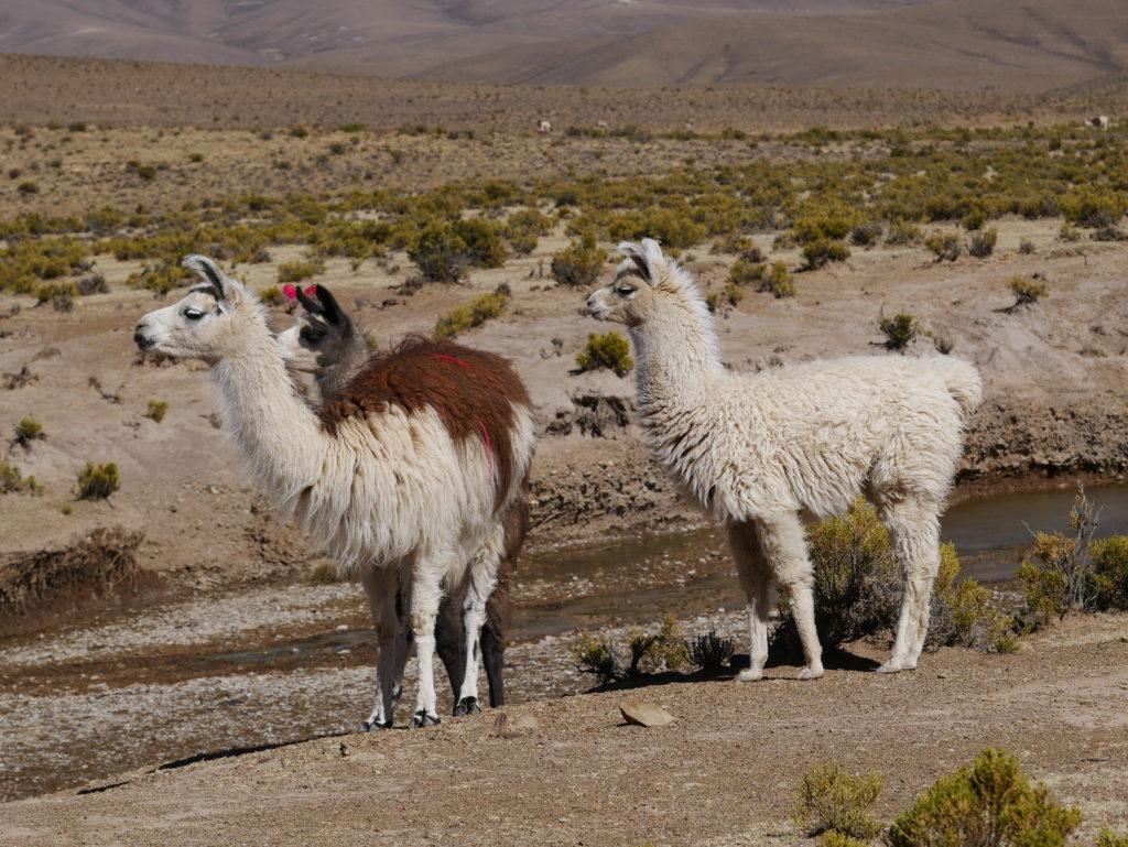 P1030156 1024x769 Sud Lipez, Salar dUyuni, Tupiza : Roadtrip en Bolivie