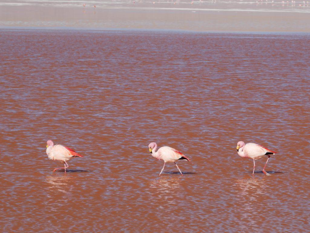P1030353 1024x769 Sud Lipez, Salar dUyuni, Tupiza : Roadtrip en Bolivie