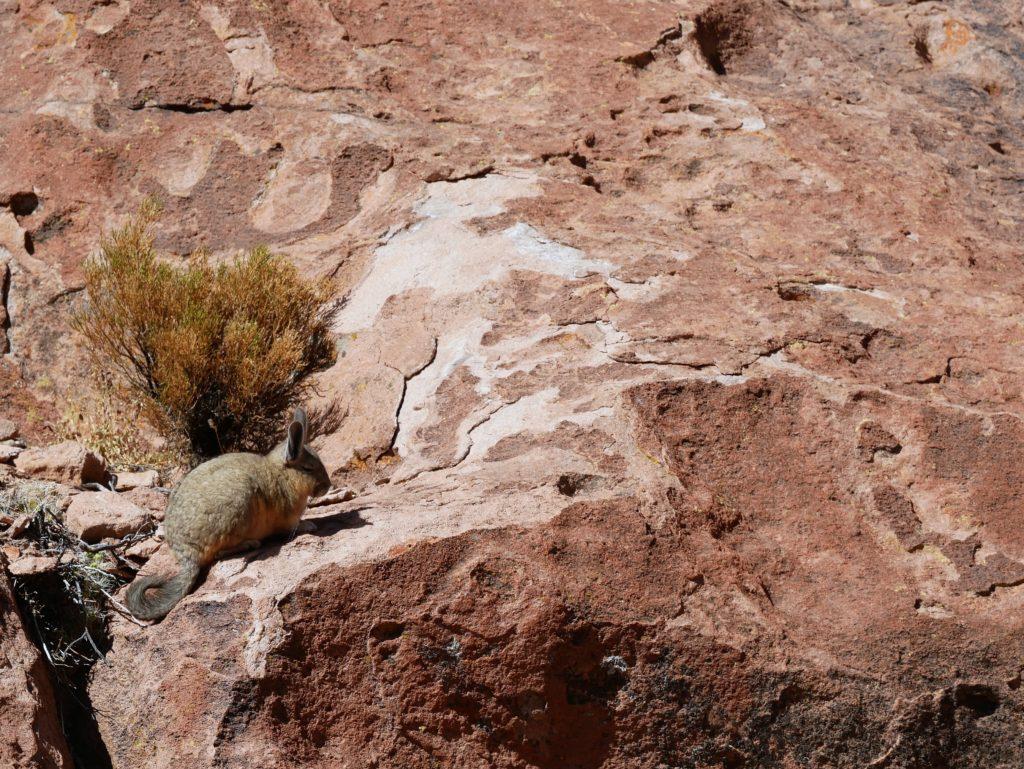 P1030427 1024x769 Sud Lipez, Salar dUyuni, Tupiza : Roadtrip en Bolivie