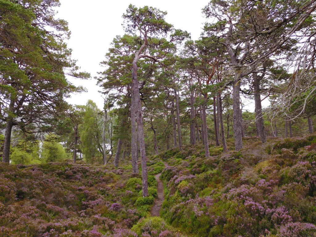 DJI 0138 1024x768 Inverness, Loch Ness et Cairngorms : au pays de leau fraîche ... et du whisky