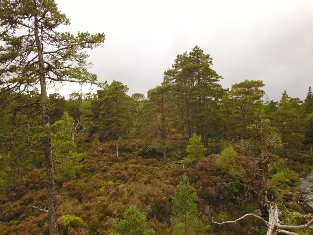 DJI 0154 1024x768 Inverness, Loch Ness et Cairngorms : au pays de leau fraîche ... et du whisky