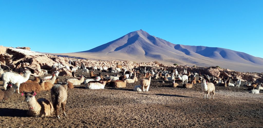 20190806 080715 1024x498 Sud Lipez, Salar dUyuni, Tupiza : Roadtrip en Bolivie
