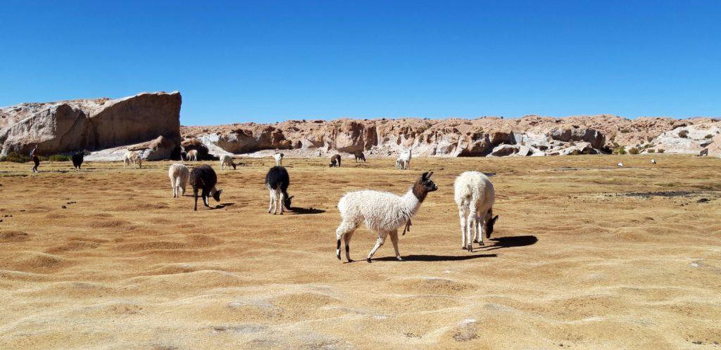 20190807 105259 1024x498 Sud Lipez, Salar dUyuni, Tupiza : Roadtrip en Bolivie