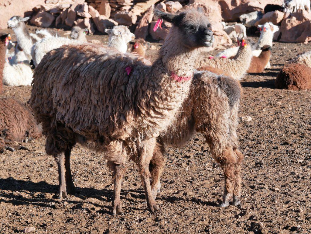 P1030231 1024x769 Sud Lipez, Salar dUyuni, Tupiza : Roadtrip en Bolivie